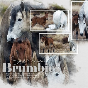Snowy Mountain Brumbies - WNC 30-8-2016