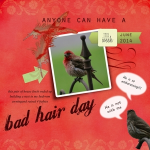 Bad Hair Day...a just for Fun page