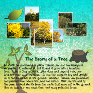 The Story Of A Tree