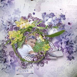 Lavender Wishes