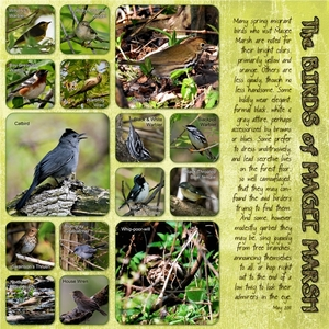 The (other) Birds of Magee Marsh
