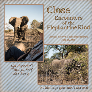 Close Encounters - Elephant
