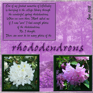 Wellesley Rhododendrons