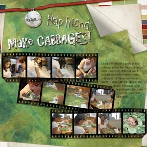 TASK 12 - Cabbages