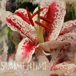 summer lillies