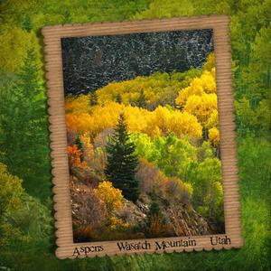 Aspens on the Wasatch Mountain