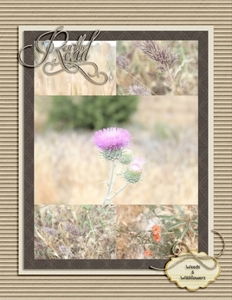 On The Road - Weeds and Wildflowers