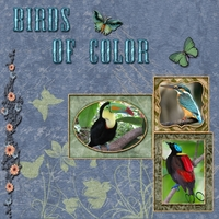 Thursday 3-22-12 Challenge -- Birds of Color