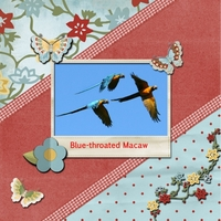Tuesday 8-30-11 Freebie Challenge -- Macaws
