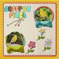 Tuesday 8-9-11 Freebie -- Saffron Finch