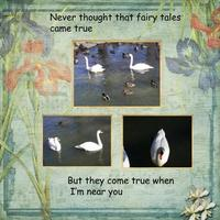 Thursday 5/7 Challenge -- Swans A Swimming