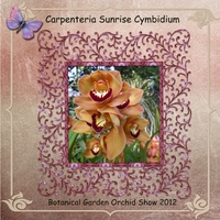 Tuesday 6-19-12 Freebie -- Sunrise Orchid