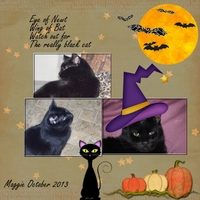 Saturday 11-23-13 Color Challenge -- My Black Cat