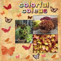 Saturday 8-25-12 Color Challenge -- Colorful Coleus