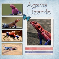 Saturday 8-4-12 Color Challenge -- Agama Lizard