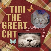 Saturday 5-26-12 Color Challenge -- Tini The Great Cat