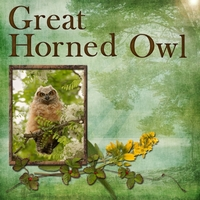 Saturday 7-21-12 Color Challenge -- Great Horned Owl