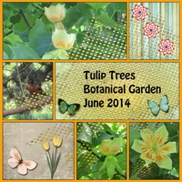 Tulip Trees -- Fri 8-8-14 Freebie
