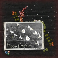 Moonflower: My favorite plant in my garden