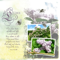 Lilacs (for Sherry Lynn)
