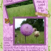 Lone Thistle in Hay Field