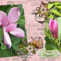 Tues. Freebie April 19th - Tulip Magnolia