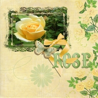 April 23 - Yellow Rose