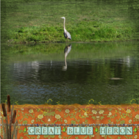 Sat. 2/16 - Great Blue Heron
