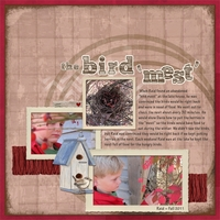 "The Bird ""Mest"" Mon 12/3 design challenge"
