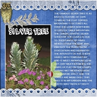 Sat Color Challenge: The Silver Tree