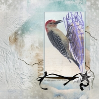 Tuesday Challenge March 21 2017: Nature - Woodpecker