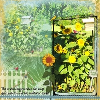 """Saturday Color Challenge  9/6/14 - """"Sunflowers"""""""