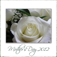 Mother's Day Rose
