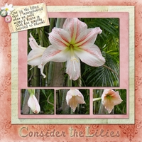 3/2012, Week 4 - Consider the Lilies