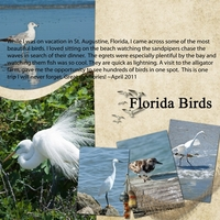 NSD: Florida Birds