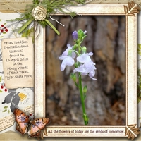 19th March  - Toadflax