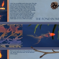 Task # 24 - The Pond in Winter