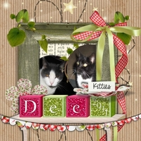 Tuesday Freebie Challenge 1-3-12: Kitties