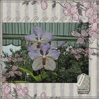 May Challenge - Flowers - Irma's Orchid