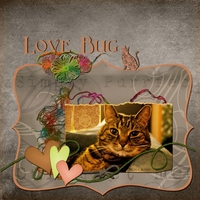 Nov 14 - HNC - Love Bug