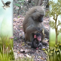 Mommy Gibbon and her baby