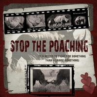 STOP THE POACHING!