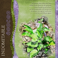 Indomitable Hostas - 6/11/12 challenge