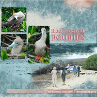Red-Footed Boobies, right
