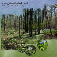 Bluebell Trail, left page