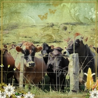 Friday freebie challenge_cows