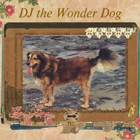 Day 20  whiskers on dogs    DJ LO