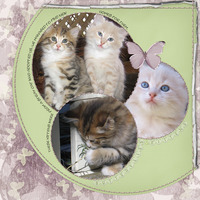 12/5 Colour Challenge - Butterflies and Kittens