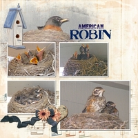 The Robin Family in the great outdoors