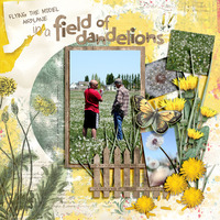 Sketch Challenge:  A Field Full of Dandelions